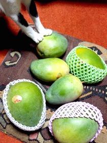 沖縄からマンゴー届く