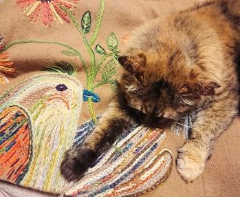 刺繍毛布 タヌソニード