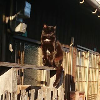 若松散歩 黒猫