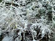 130114庭雪1