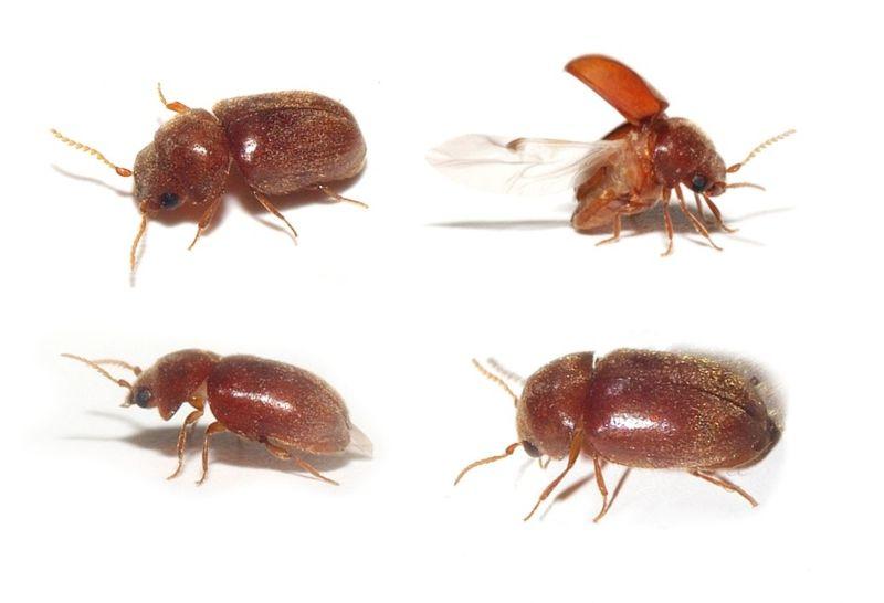 Nikt nie wie co to za robak  Owady do oznaczenia