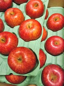 121210青森リンゴ