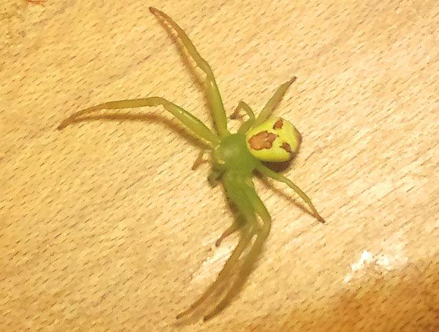 花蜘蛛 : 山福朱実☆べむべろ通信