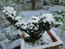 130114庭雪2