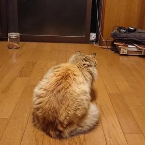 タヌソニードを覗くキノコ