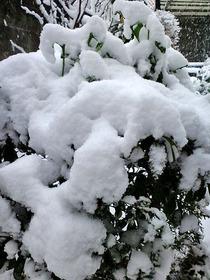 130114雪庭06