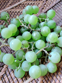 110811葡萄