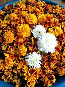 121102死者の花