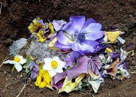 ヒヨドリ埋葬