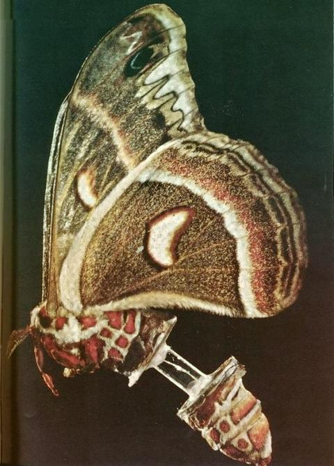 horror-pupal-test6