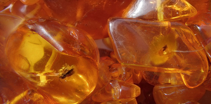 Baltic_Amber_necklace_with_insects_inclusions
