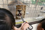 群馬サファリパーク ライオンえさ