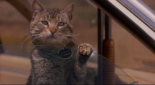 スリープウォーカーズ : 猫がい...