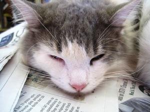 cat-209308_640