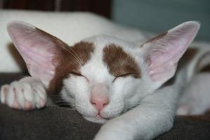 cat-408810_640