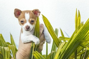puppy-1040947_640
