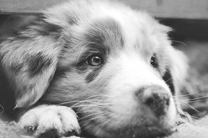 dog-698642_640