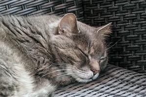 cat-1524309_640