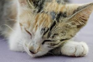 cat-427008_640