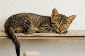 kitten-1137674_640