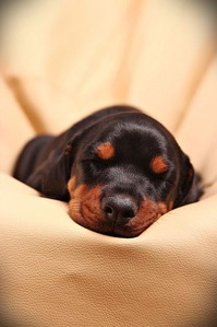 luna-sleeping-baby-1045311_640