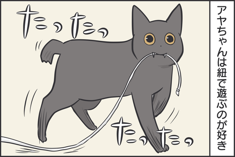 紐で遊ぶ猫1