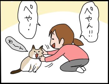 猫の名前5