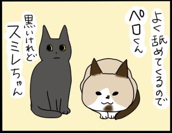 猫の名前1