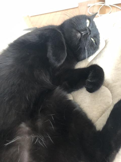 だらける猫2