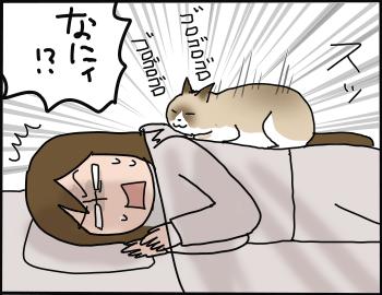 猫の重さ5