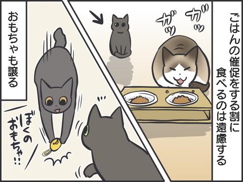 不器用猫1