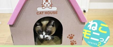 猫も二ハウス