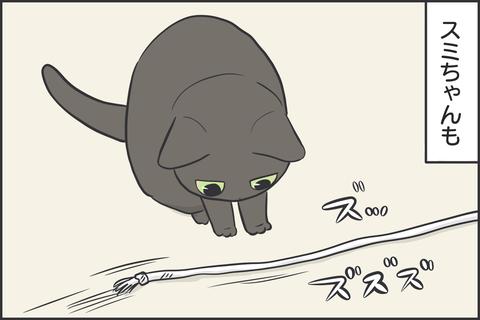 紐が好きな猫