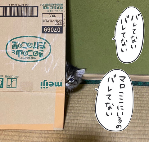 IMG_8657