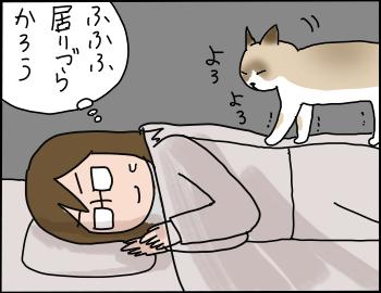 猫の重さ4