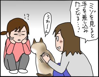 猫の萌えポイント7