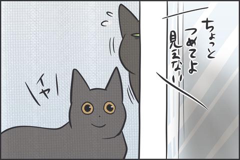 取り合いする猫