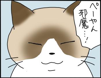 ぺろ邪魔1