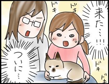 猫を抱きたい6