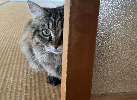 隠れたつもりの猫