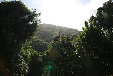 ハワイオーブ1