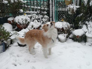 青輝 雪11