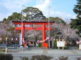 桜2008−2