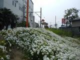 ジヤトコ前駅の花2