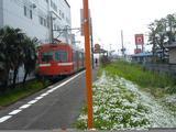 ジヤトコ前駅の花1