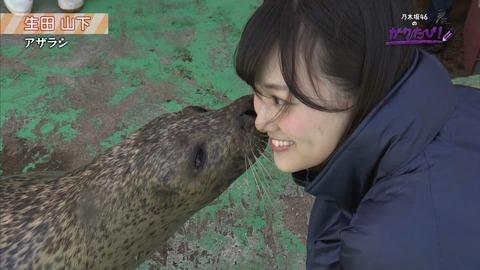 【乃木坂46】いよいよ調教の時間!生田と山下にキスをするアザラシが羨ましいwww【ガクたび】