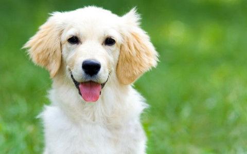 犬ってどこまで人間の言葉を理解してるんや?