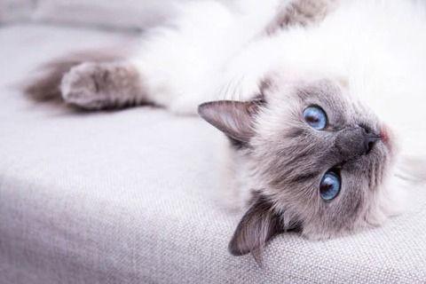 【オカルト】飼い猫のチョビが助けてくれた話