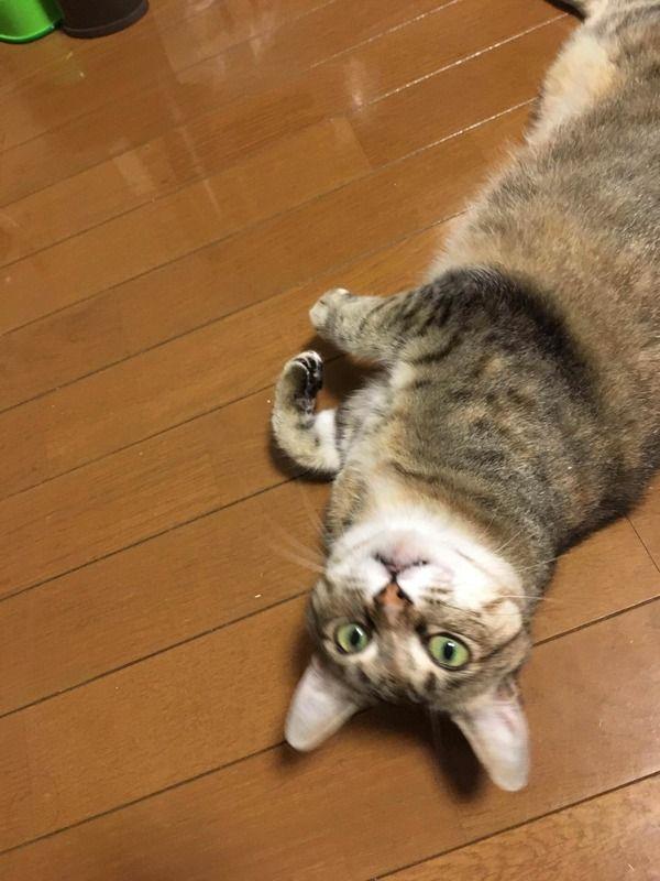 猫をもらって二ヶ月ちょっと経ったので自慢しにきた(画像あり)