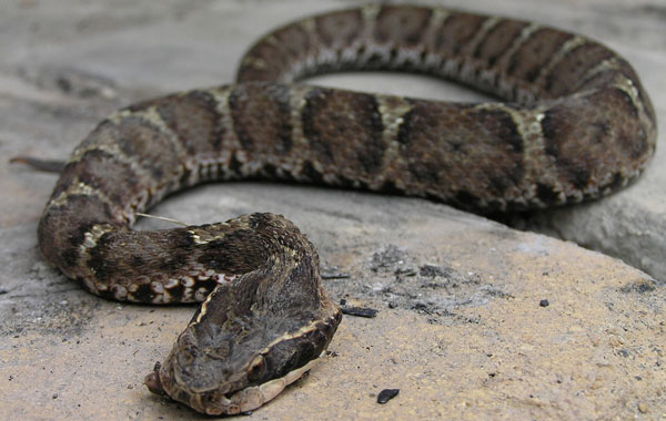「神霊蛇」死ぬ程洒落にならない怖い話